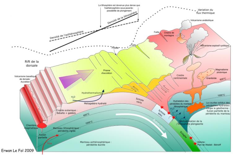 schéma SVT restitution organisée de connaissances